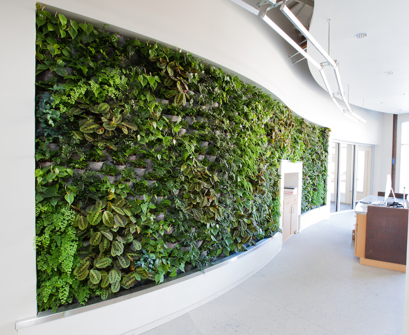 As part of its efforts to earn the International Future Living Institute's Living Building Challenge certification for its 8,200-sf office in Sacramemto, Calif., the design firm Architectural Nexus irrigated its plant wall with repurposed greywater. Image: Architectural Nexus